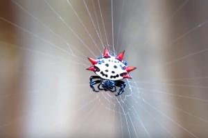 Οι 5 πιο παράξενες αράχνες. Μη φοβάσαι, αράχνες είναι! (VIDEO)