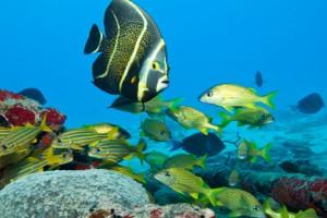 Τα καλύτερα μέρη του κόσμου για scuba diving. (VIDEO)
