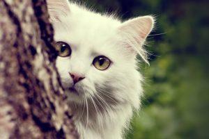 Τα 44 πιο γνωστά ονόματαγια γάτες και γάτους