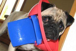 6 πράγματα από τα οποία κινδυνεύει ο σκύλος σου