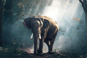 Αυτοπεριορισμός: το σύνδρομο του μικρού ελέφαντα