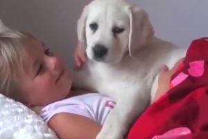 Δείτε γιατί ένα λαμπραντόρ είναι ο καλύτερος φίλος για τα παιδιά! (VIDEO)
