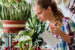 Ποιο φυτό σας ταιριάζει ανάλογα με το ζώδιό σας: Οι Παρθένοι επιλέγουν την αζαλέα κι οι Υδροχόοι την μπιγκόνια.